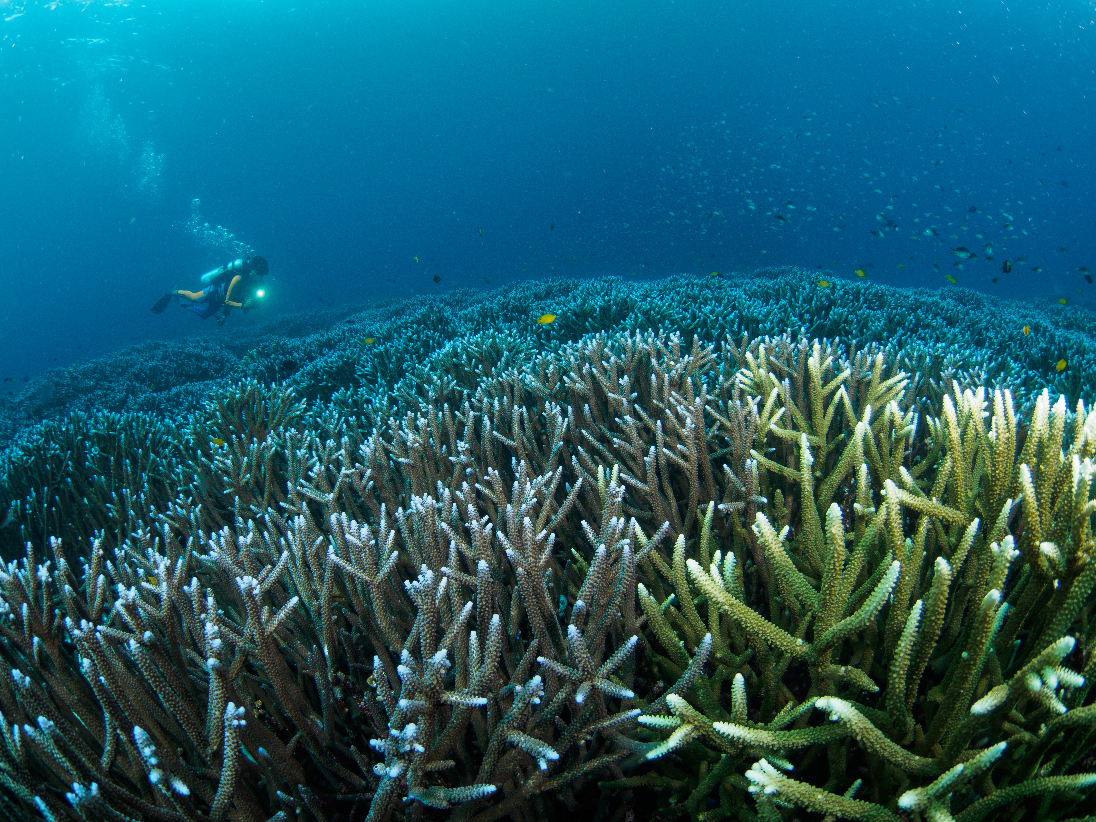 An incredible photo of the underwater landscape in Indonesia.